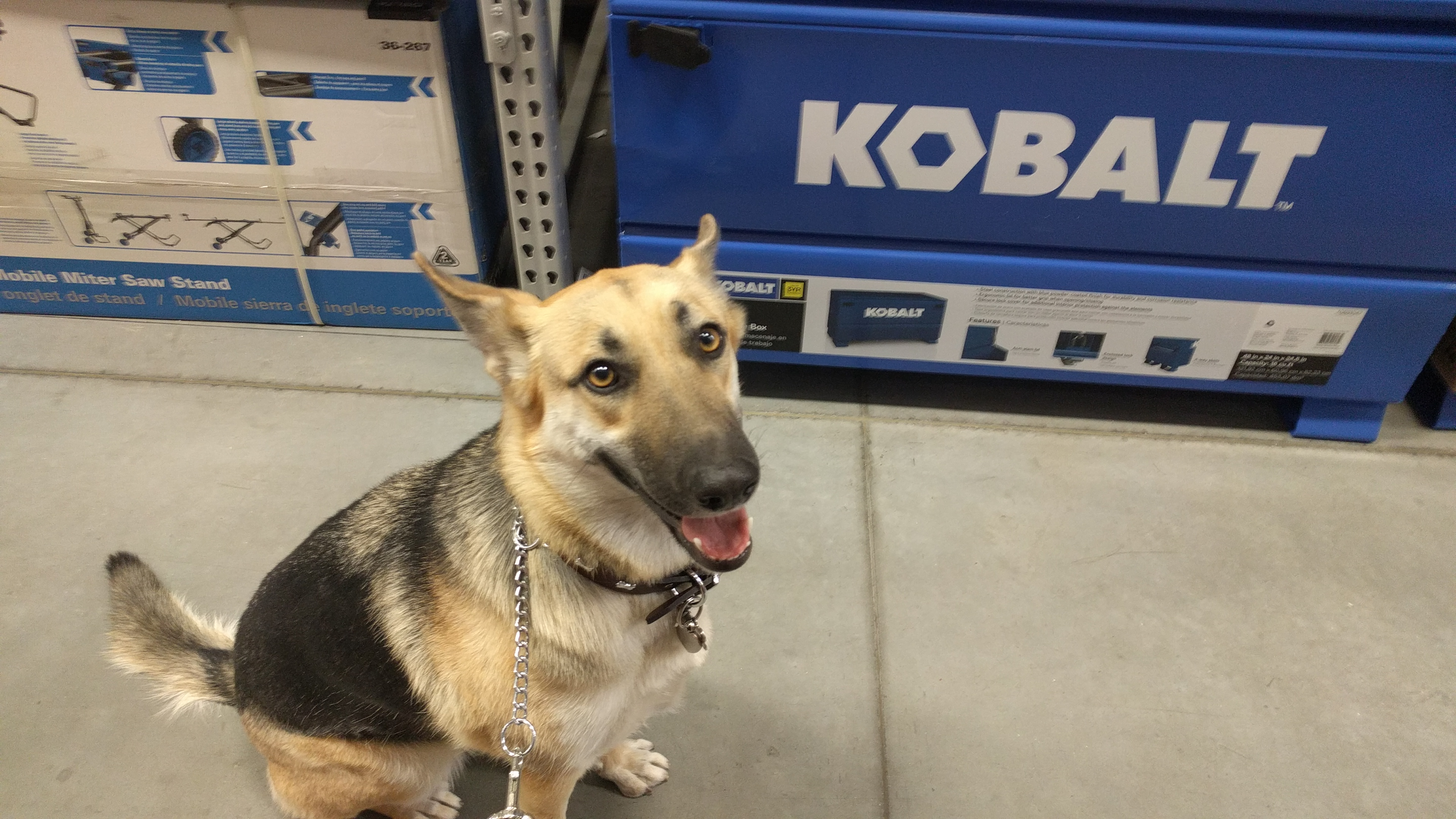 Lexi out for a shopping trip at Lowe's